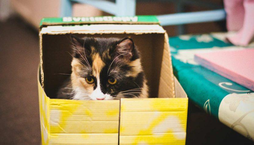 Mačka u kartonskoj kutiji, slika pixabay.com